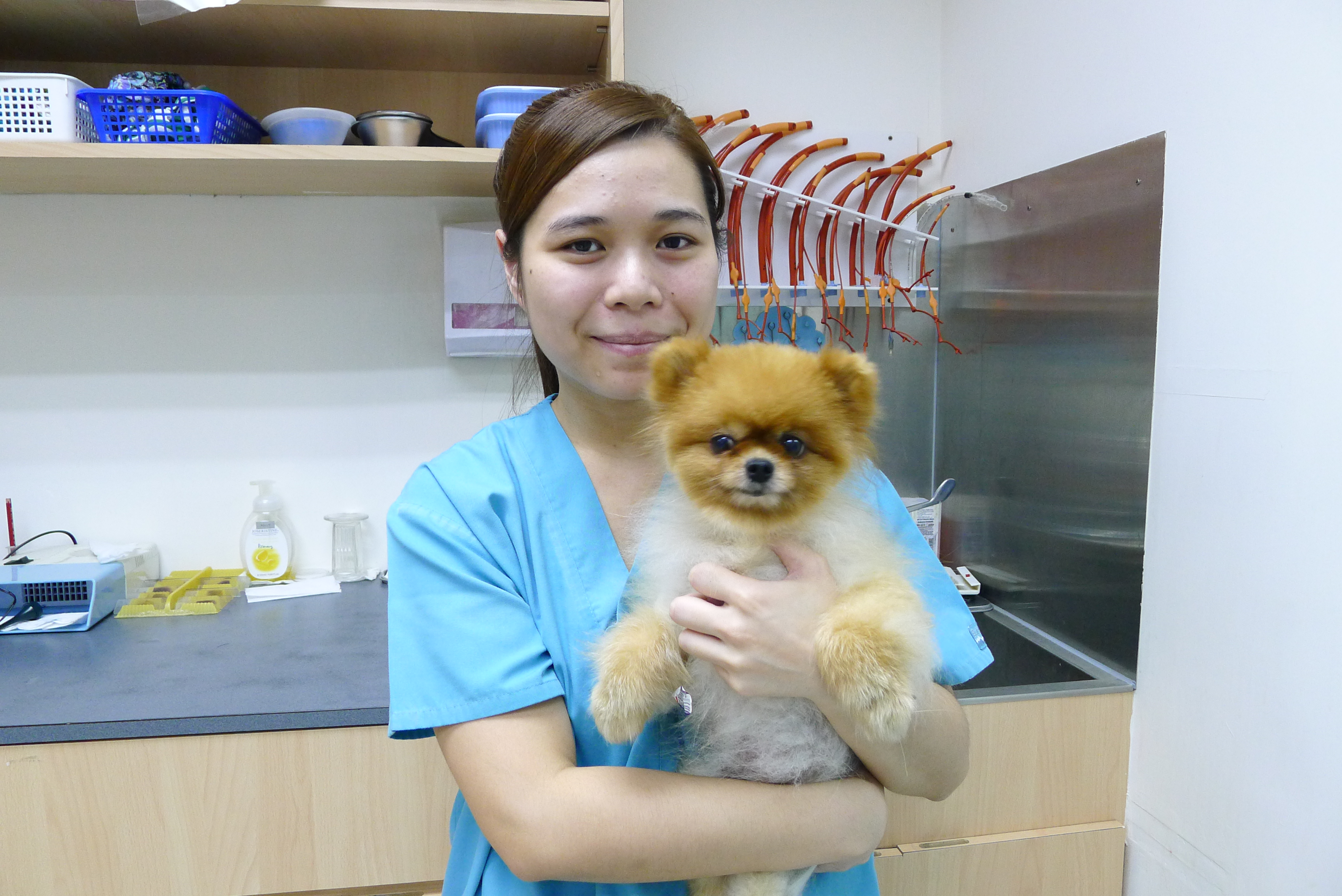 Veterinary Assistants Soares Avenue Paws Claws Clinicsoares